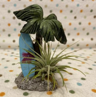 Tilla Critters Surfs Up One of a Kind Airplant Creations by Chili Fiesta Handiwo