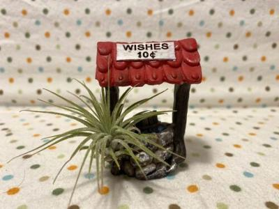Tilla Critters Make a Wish One of a Kind Airplant Creations by Chili Fiesta Hand