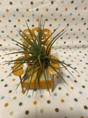 Tilla Critters Sitting Pretty One of a Kind Airplant Creations by Chili Fiesta H