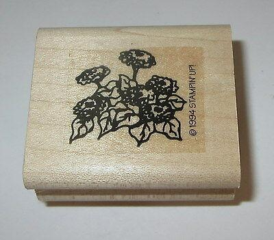 Hydrangea Flowers Rubber Stamp Stampin' Up! Rare Retired Plant Wood Mounted