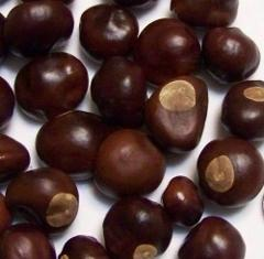Ohio Buckeye Nuts Buy 1 10 25 50 or 100 Dried 2019 Crop Lucky ...