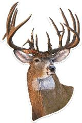 Whitetail Deer Auto Magnet Car Truck Safe Magnetic Art 9.5