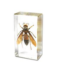 Wasp Yellow Jacket Genuine INSECT Desktop Paperweight Paper We...