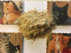 African Dream Root Powder (Silene Capensis) 1g-1lb