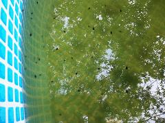 8 Live Tree Frog Tadpoles Mixed Greens Leopards Peepers Amount...